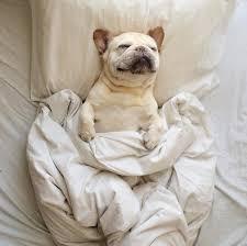 perro duerme