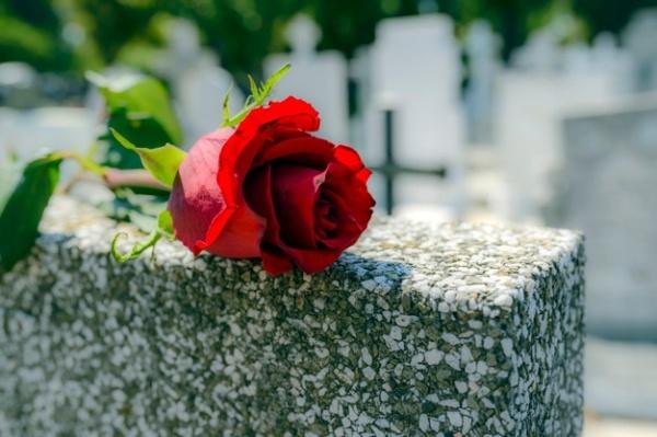 rosa-roja-dejo-lapida-cementerio-alguien-que-fallecio_11055-2089
